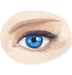 eye blue vector image