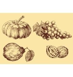 Fruits set hand drawn vector image