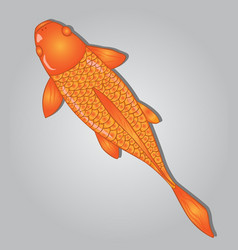 koi fish design vector image