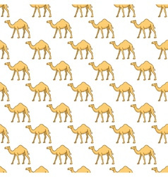 Camels pattern vector