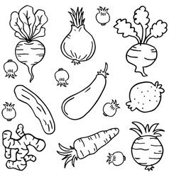 Doodle of vegetable collection object vector