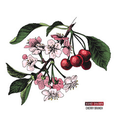Hand drawn cherry branch vector