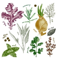 Hand drawn herbs and spices set in color vector