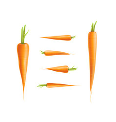 Photo-realistic carrot set isolated vector