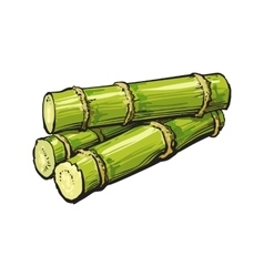 Pile of fresh raw green sugar cane vector