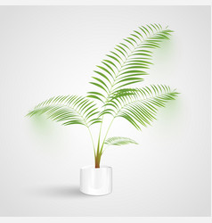 plant on white background vector image