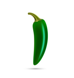 realistic green hot natural jalapenoi pepper vector image