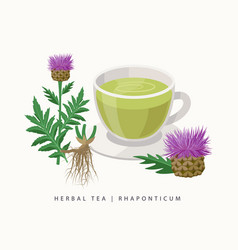 Rhaponticum herbal tea isolated on white vector