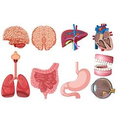 Set human anatomy vector