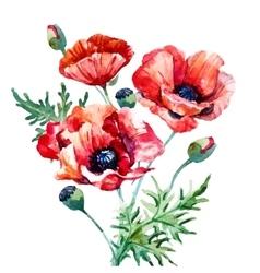 Watercolor poppy composition vector