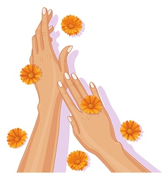 hands and calendula vector image