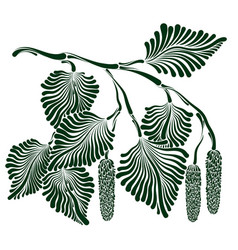 Branch of birch with buds vector