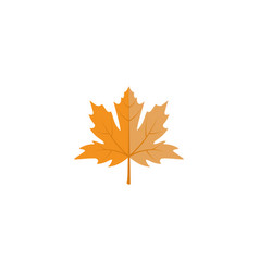 fall leaf icon design template isolated vector image