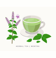 Mentha herbal tea isolated on white background vector