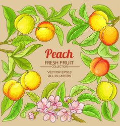 Peach branches frame on color background vector