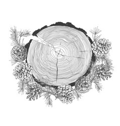 realistic botanical ink sketch of fir tree vector image