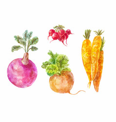 Set of underground vegetables vector