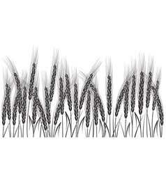 Black wheat isolated on white background vector