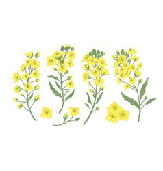 bundle elegant botanical drawings blooming vector image