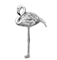 flamingo black and white sketch vector image