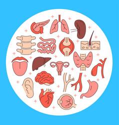 Human internal organs round concept banner vector