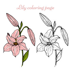 Lily flower coloring page vector