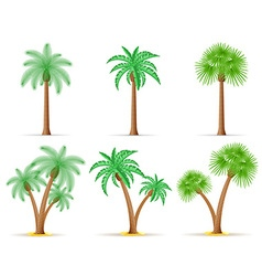 Palm tree 27 vector