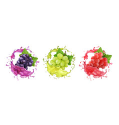 Red rose and white wine grapes in juice splash vector