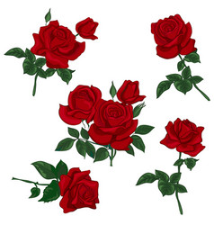 set red rose vector image