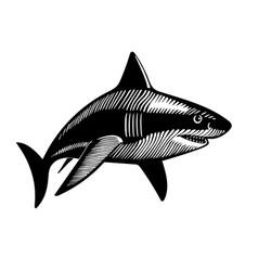 swimming shark ink drawing vector image