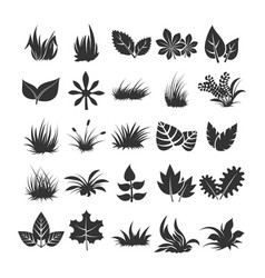 leaves and grass silhouettes on white background vector image