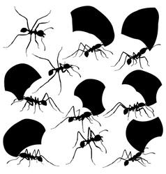 Leaf cutter ants vector image