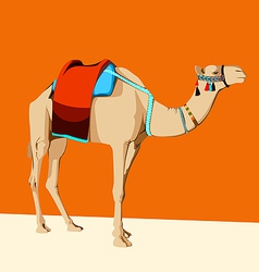 camel with a saddle vector image