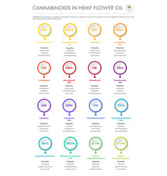 Cannabinoids in hemp flower oil vertical business vector