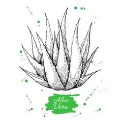 Hand drawn botanical Aloe Vera Engraved vector