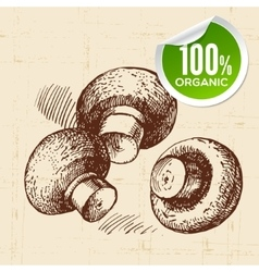 Hand drawn sketch vegetables mushrooms Eco food vector
