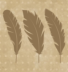 set vintage feathers vector image
