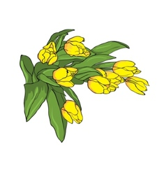 yellow tulips vector image