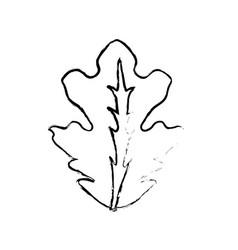 Edge delicious leaf lettuce organ food vector