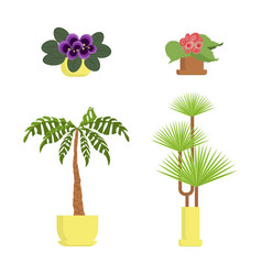 house growing potted vector image