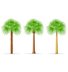 Palm tree 28 vector