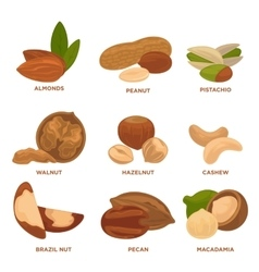 Ripe nuts and seeds vector image vector image