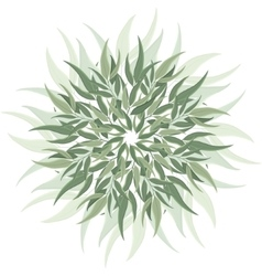 Abstract nature eucalyptus ornament vector image