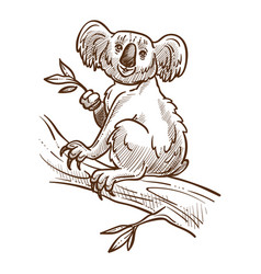Australian symbol koala bear on tree branch vector