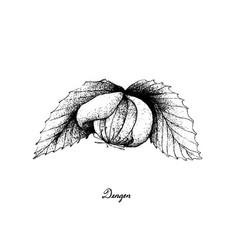 Hand drawn of a fresh dengen fruits vector