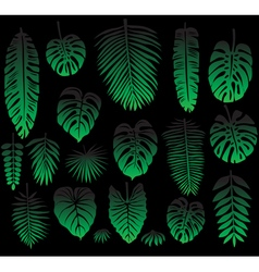 Set of Tropical Leaves on black vector image