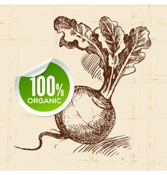 Hand drawn sketch vegetable turnip Eco food vector