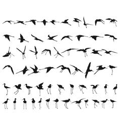 Sixty Black-winged Stilts vector