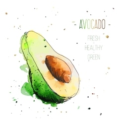 Watercolor avocado with splashes in free style vector