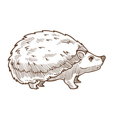 Wild forest animal hedgehog with spines isolated vector